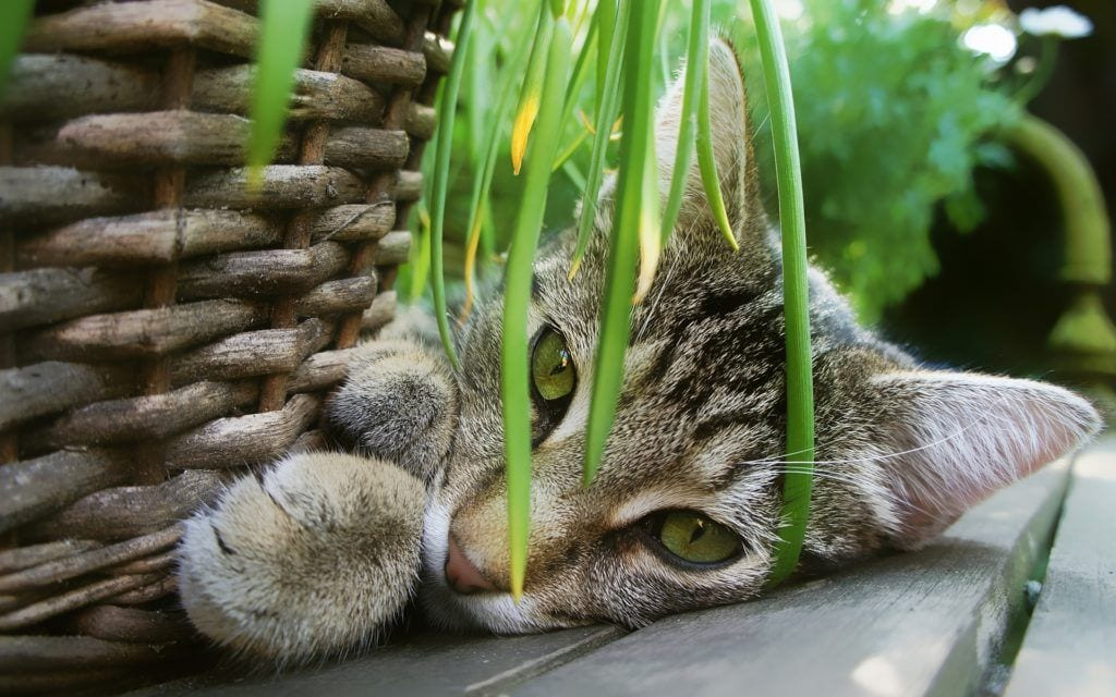 Indoor Herbs Safe for Cats