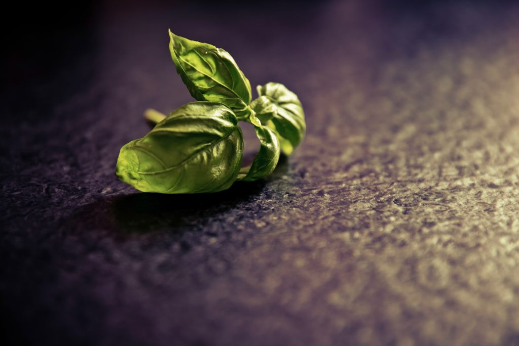 Wilted Basil of Temperature