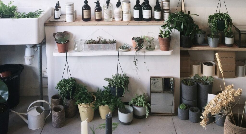 Herbs Growing Together