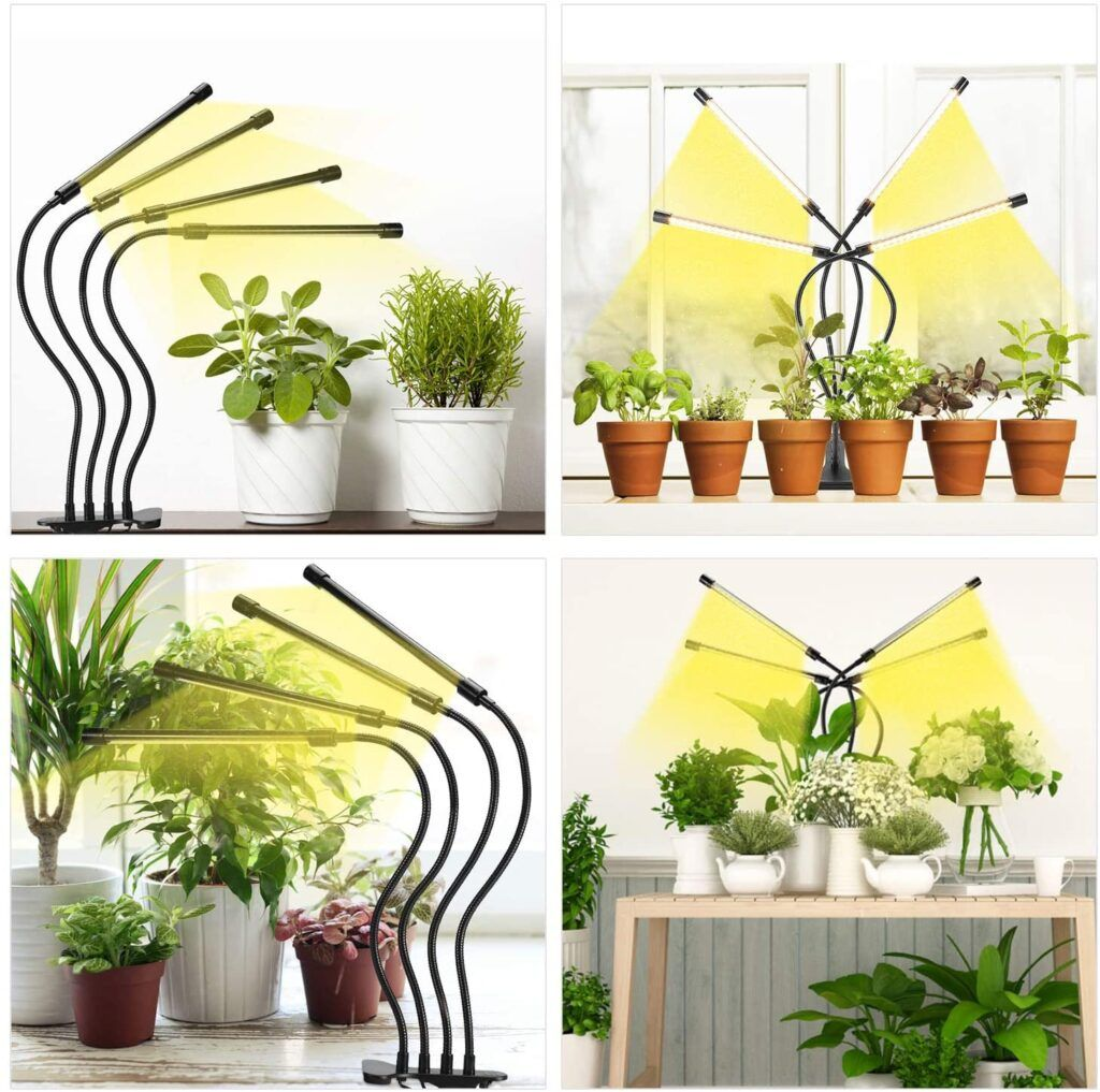 growing plants with lights