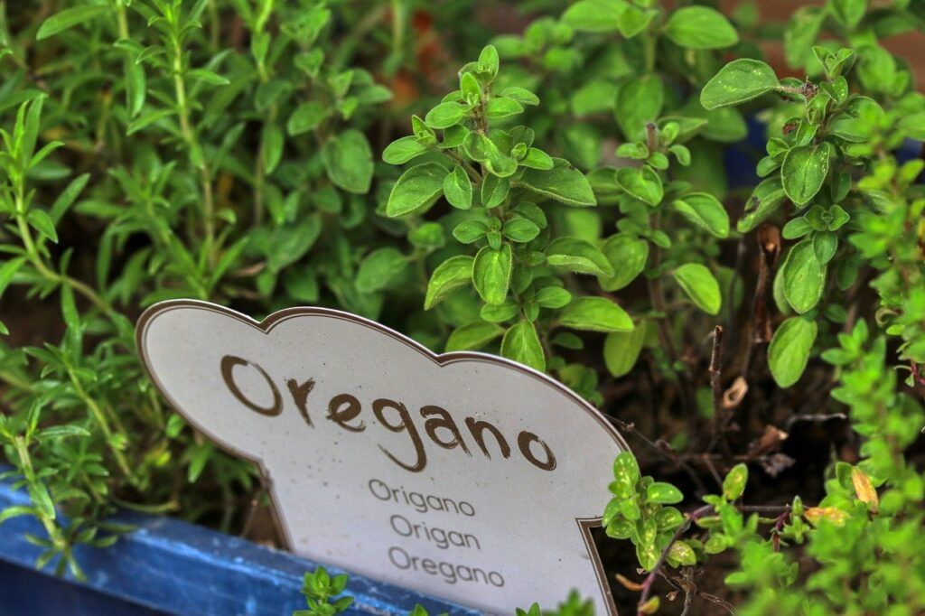 Companion Planting Herbs and Vegetables