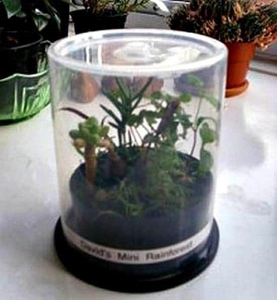 CD Spindle Case Mini Indoor Greenhouse