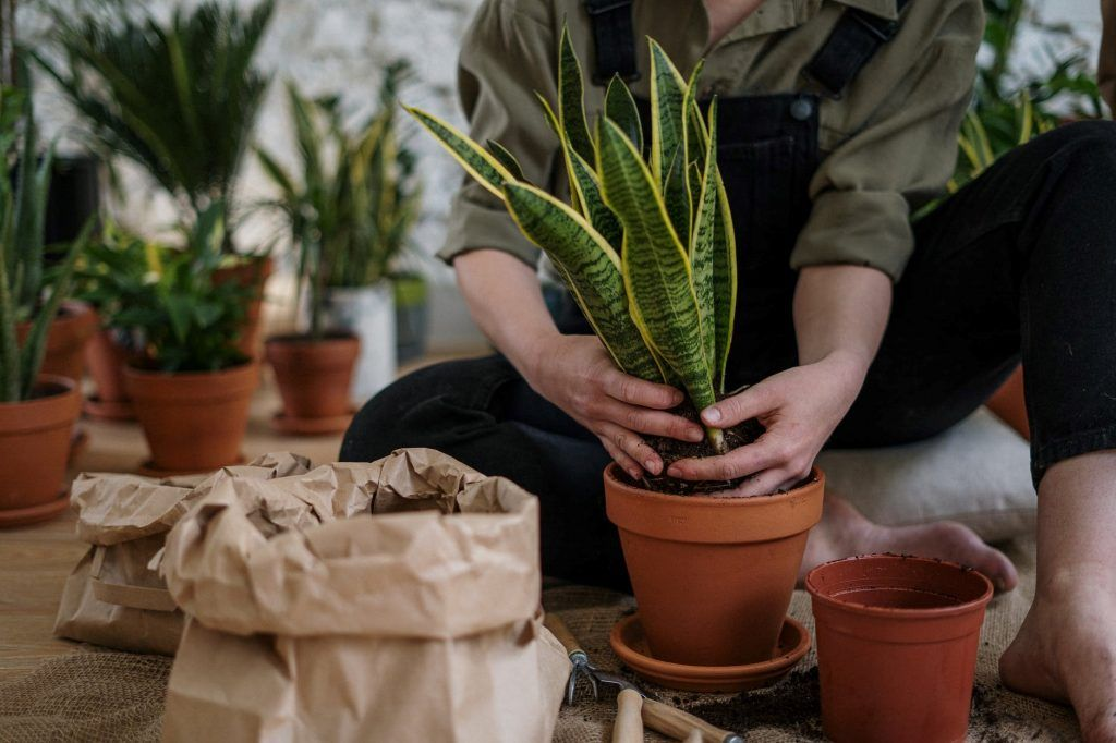 Repotting a Plant