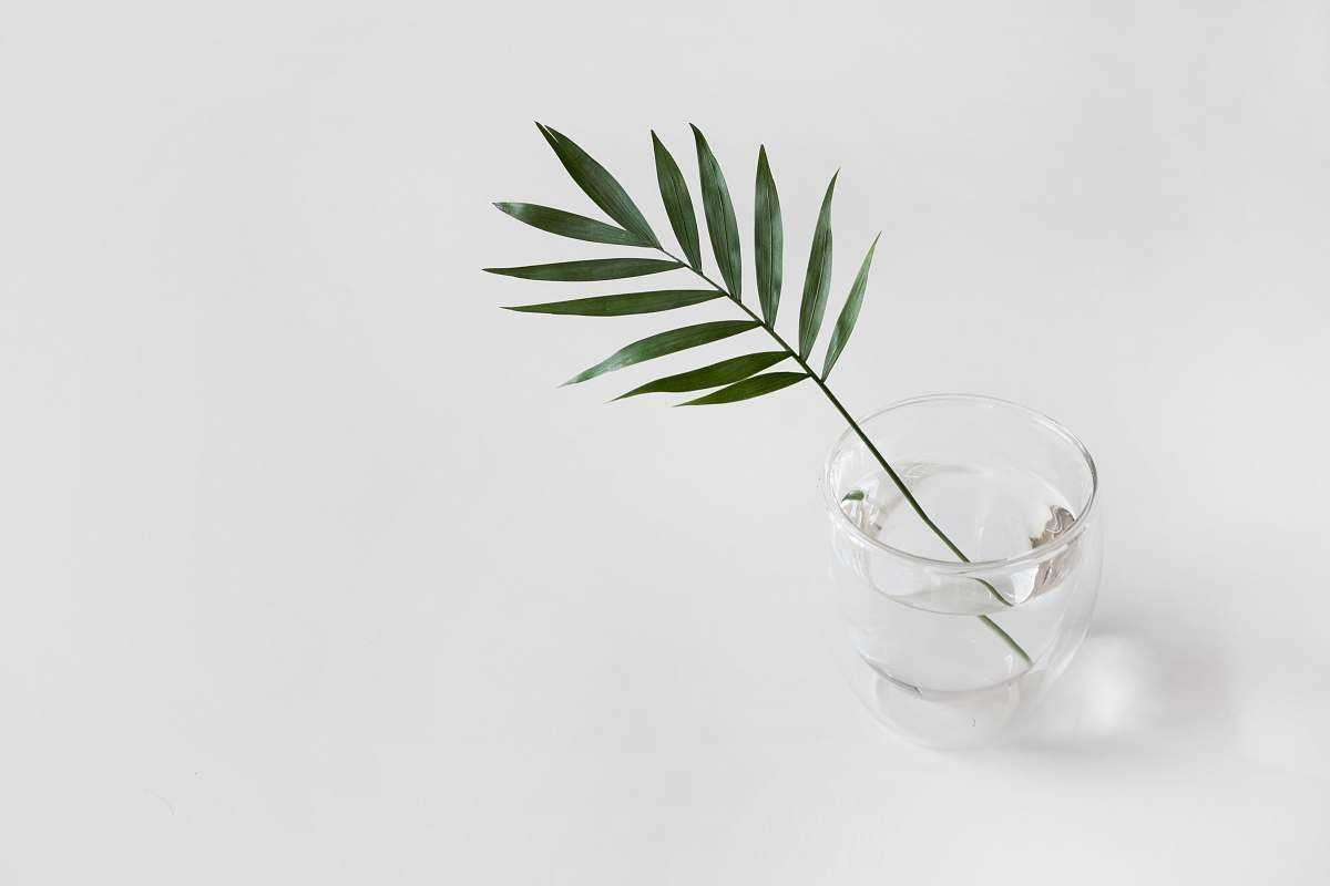 plant growing in glass