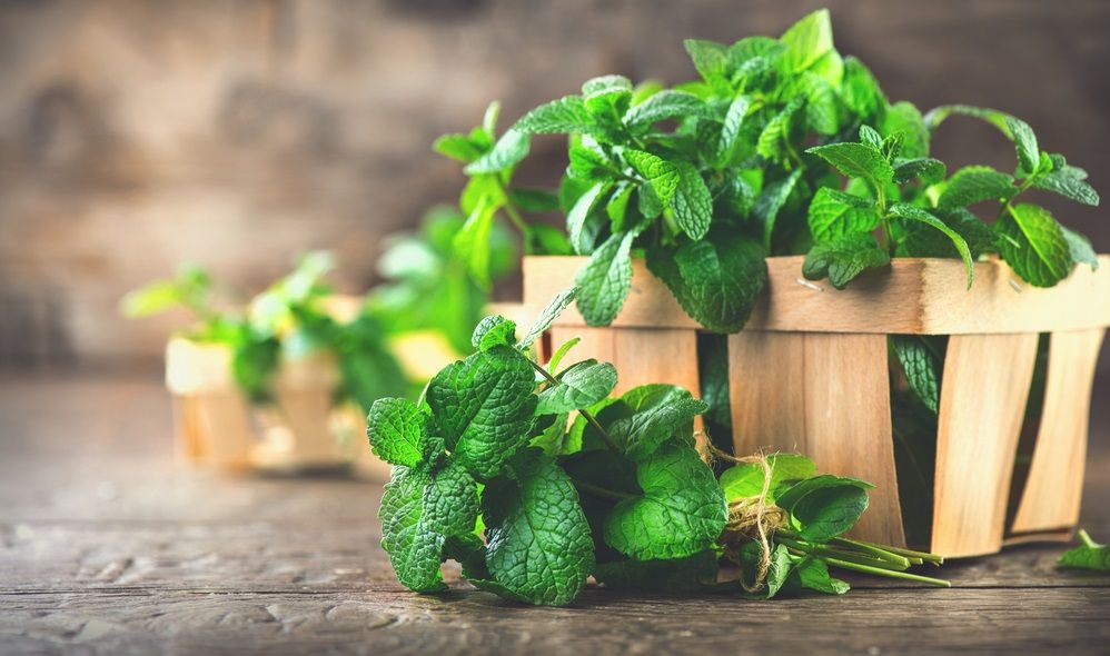 Bunch of Fresh green organic mint leaf on wooden table