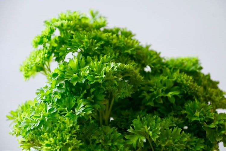 Prepare Parsley for Drying