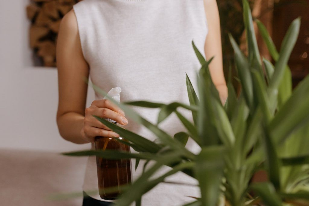 How to mix neem oil for planys