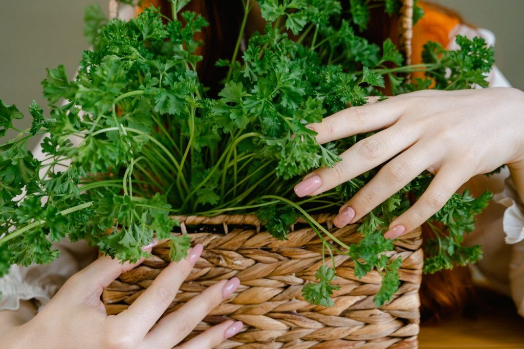 How to dry parsley at home